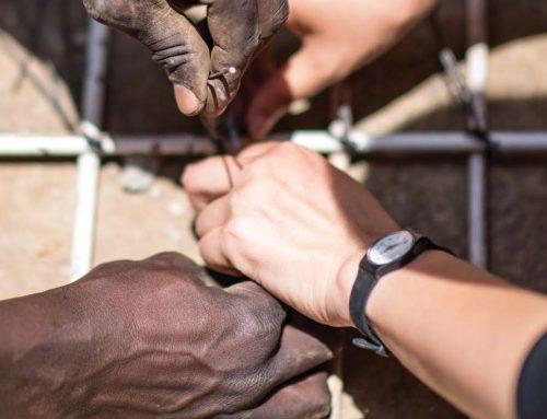 龙狮共舞:中非经济合作现状如何,未来又将如何发展?